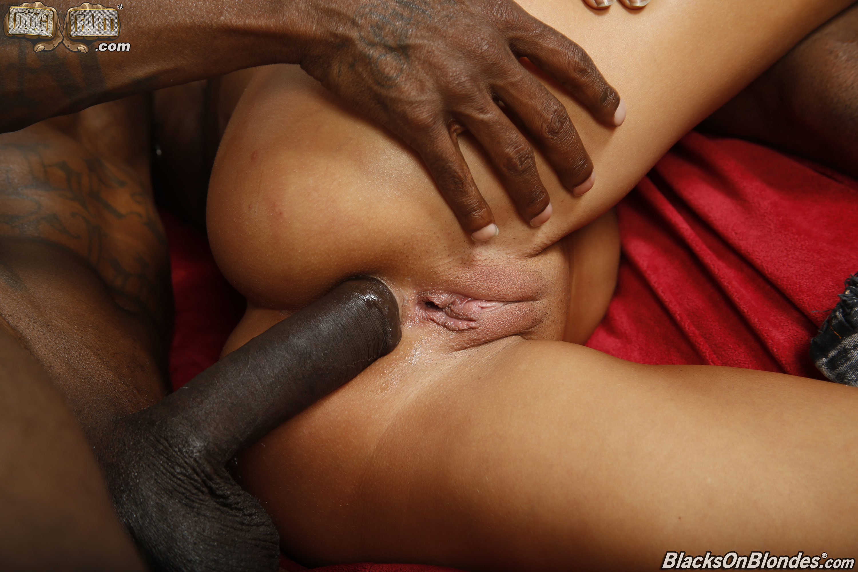 galleries blacksonblondes content amirah adara pic 22